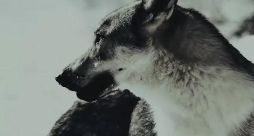 """Piccolo filmato tratto dal film: """"Educazione siberiana"""" del 2013. Educazione Siberiana è un film del 2013 diretto da Gabriele Salvatores, tratto dall'omonimo romanzo di Nicolai Lilin. Nel film ha un…"""
